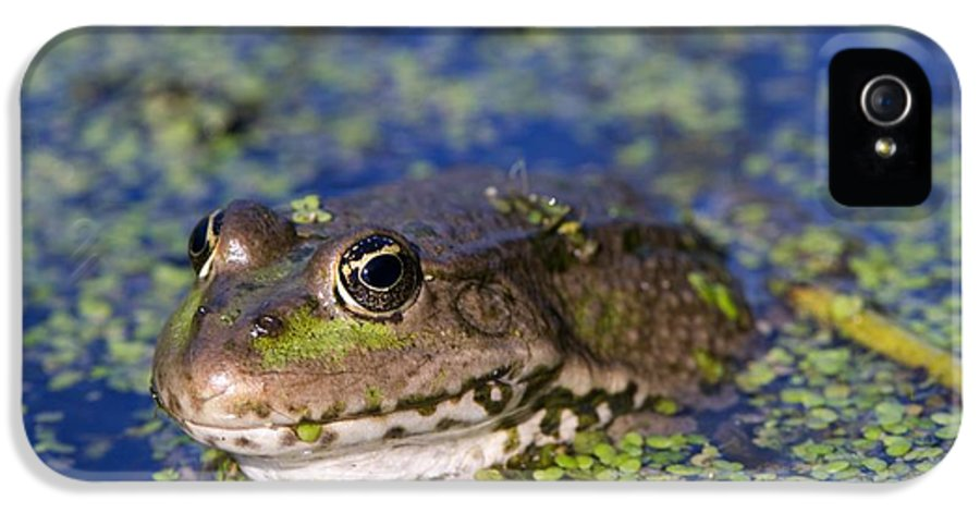 Algae IPhone 5 / 5s Case featuring the photograph Marsh Frog by Louise Murray