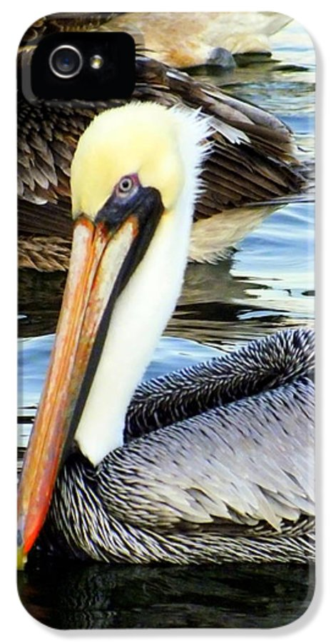 Birds IPhone 5 / 5s Case featuring the photograph Pelican Pete by Karen Wiles