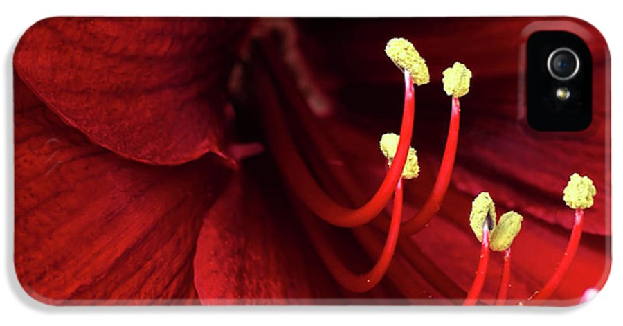 Art IPhone 5 / 5s Case featuring the photograph Ref Lily by Carlos Caetano