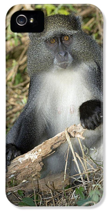 Ssp. Labiatus IPhone 5 / 5s Case featuring the photograph Samango Monkey by Tony Camacho