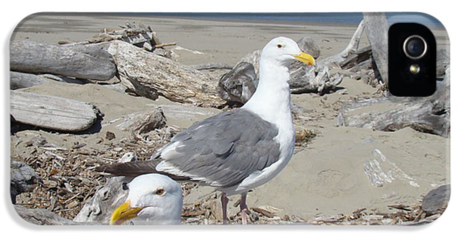 Seagull IPhone 5 / 5s Case featuring the photograph Seagull Bird Art Prints Coastal Beach Bandon by Baslee Troutman