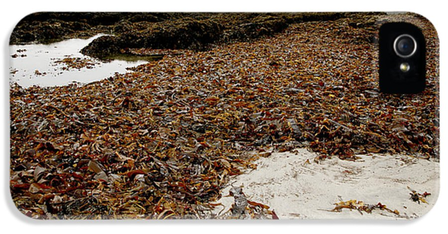 Kelp IPhone 5 / 5s Case featuring the photograph Seaweed Covered Beach by Dr Keith Wheeler