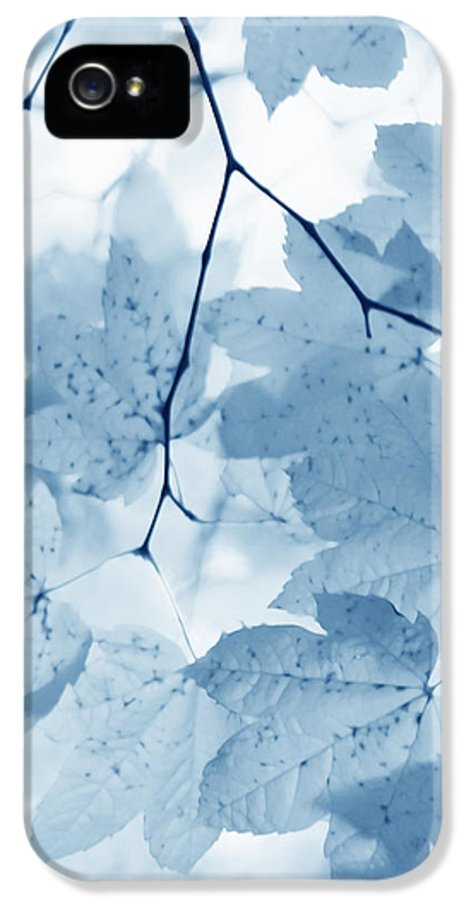 Leaf IPhone 5 / 5s Case featuring the photograph Softness Of Blue Leaves by Jennie Marie Schell