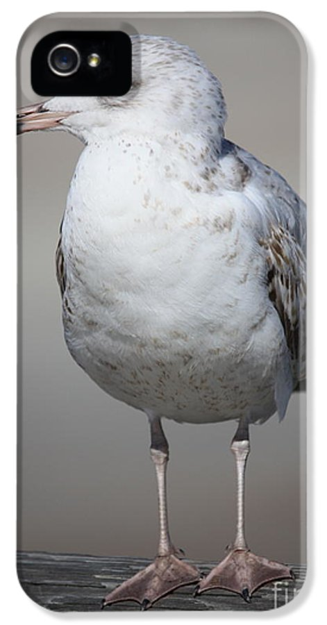 Seagull IPhone 5 / 5s Case featuring the photograph Standing Seagull by Carol Groenen