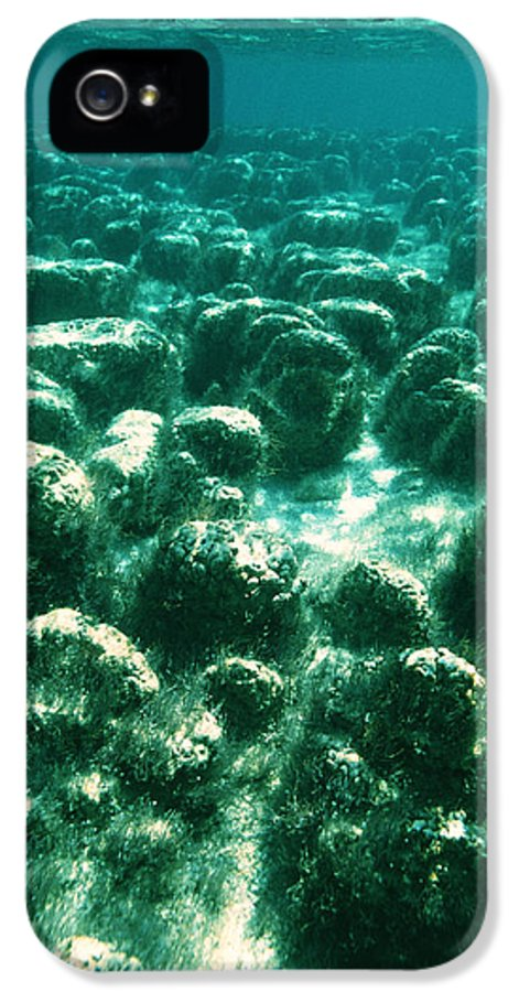 Hamelin Pool IPhone 5 / 5s Case featuring the photograph Stromatolites by Peter Scoones