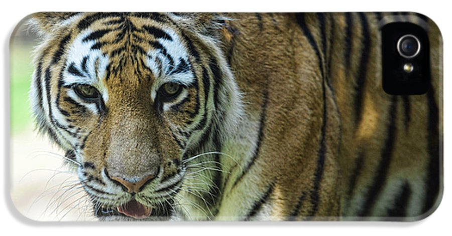 Tiger IPhone 5 / 5s Case featuring the photograph Tiger - Endangered - Wildlife Rescue by Paul Ward