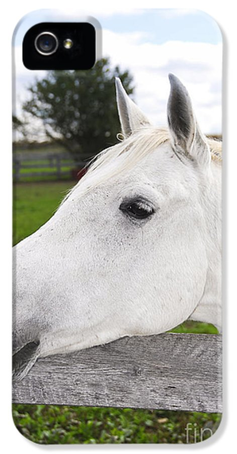 Horse IPhone 5 / 5s Case featuring the photograph White Horse by Elena Elisseeva