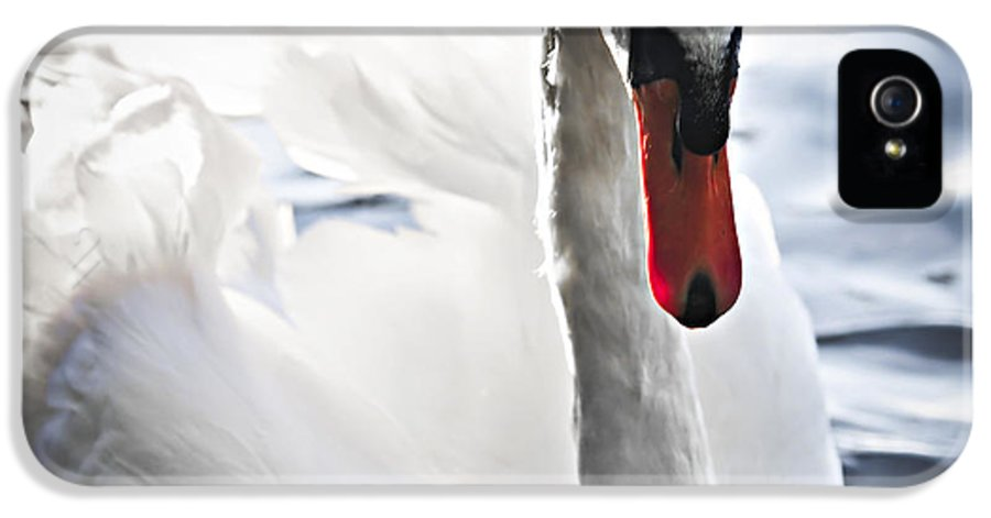 Swan IPhone 5 / 5s Case featuring the photograph White Swan by Elena Elisseeva