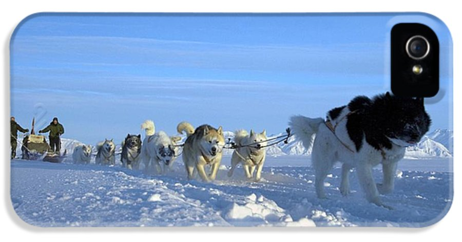 Snow IPhone 5 / 5s Case featuring the photograph Dogsledge, Northern Greenland by Louise Murray