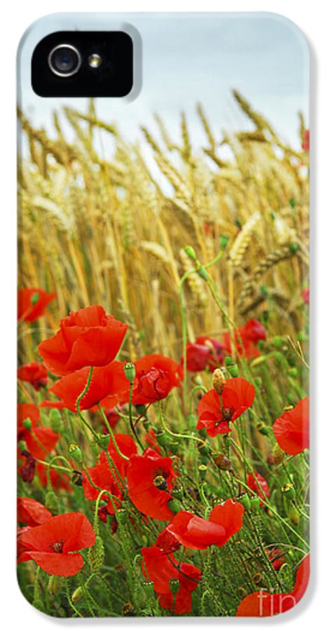 Poppy IPhone 5 / 5s Case featuring the photograph Grain And Poppy Field by Elena Elisseeva
