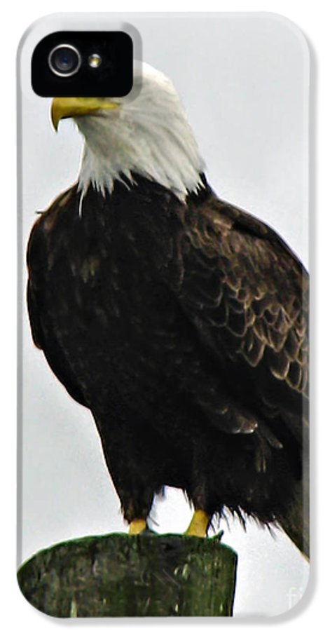 Haliaeetus Leucocephalus IPhone 5 / 5s Case featuring the photograph American Bird by Robert Bales
