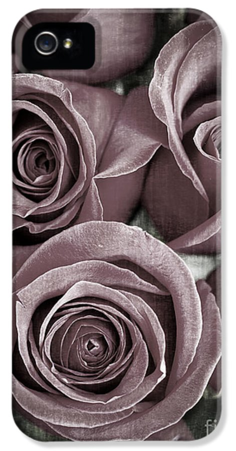 Roses IPhone 5 / 5s Case featuring the photograph Antique Roses by Edward Fielding