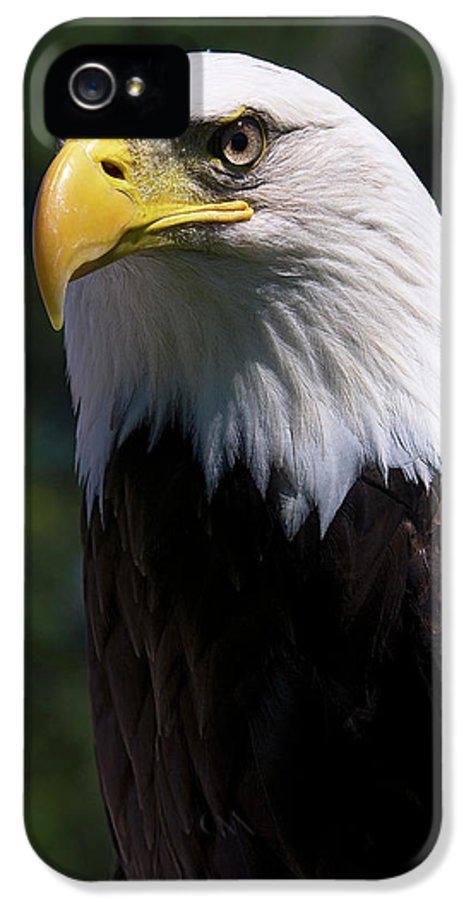 Skyhunter IPhone 5 / 5s Case featuring the photograph Bald Eagle by JT Lewis