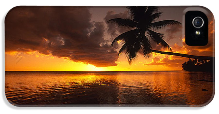 Bent IPhone 5 / 5s Case featuring the photograph Bending Palm by Ron Dahlquist - Printscapes