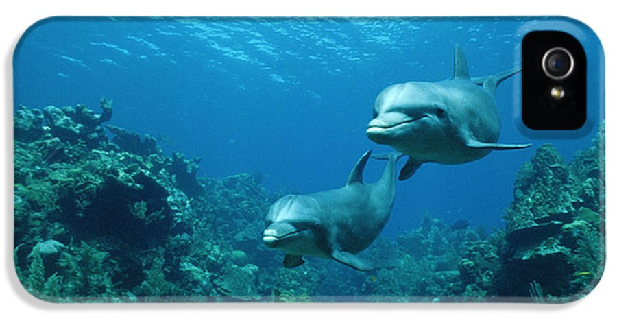 Mp IPhone 5 / 5s Case featuring the photograph Bottlenose Dolphins And Coral Reef by Konrad Wothe