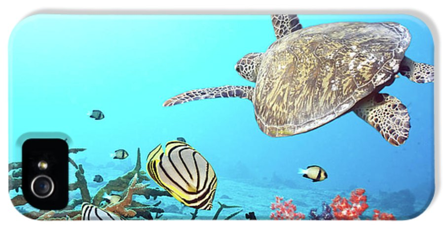 Butterflyfish IPhone 5 / 5s Case featuring the photograph Butterflyfishes And Turtle by MotHaiBaPhoto Prints