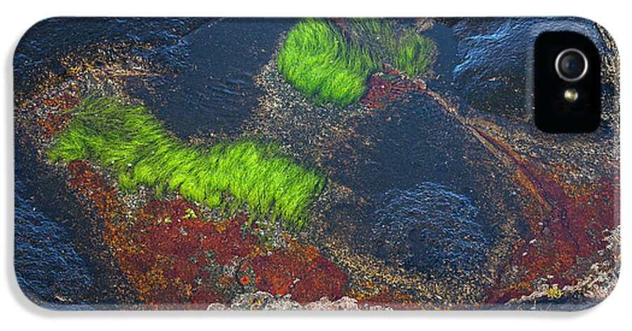 Blue IPhone 5 / 5s Case featuring the photograph Coastal Floor At Low Tide by Heiko Koehrer-Wagner