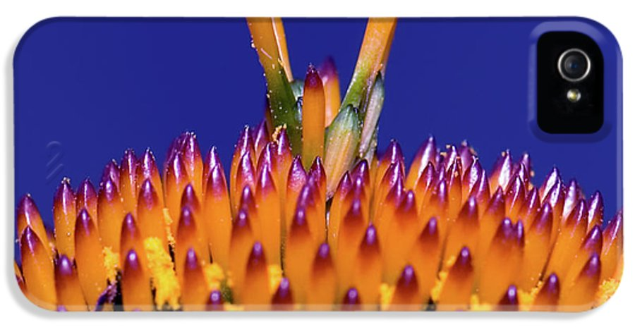 Coneflower IPhone 5 / 5s Case featuring the photograph Coneflower Study by Betty LaRue
