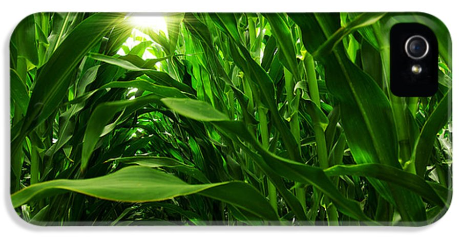 Agriculture IPhone 5 / 5s Case featuring the photograph Corn Field by Carlos Caetano