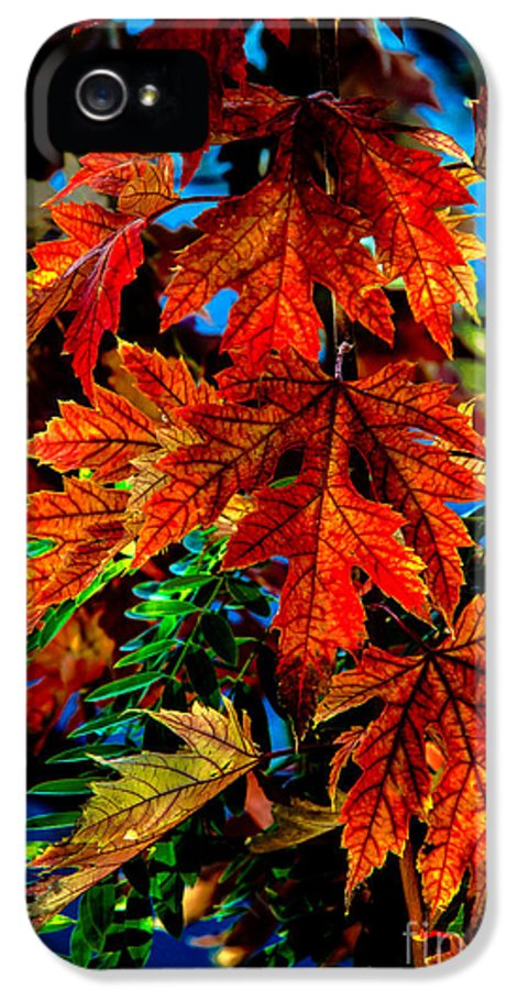 Maple IPhone 5 / 5s Case featuring the photograph Fall Reds by Robert Bales