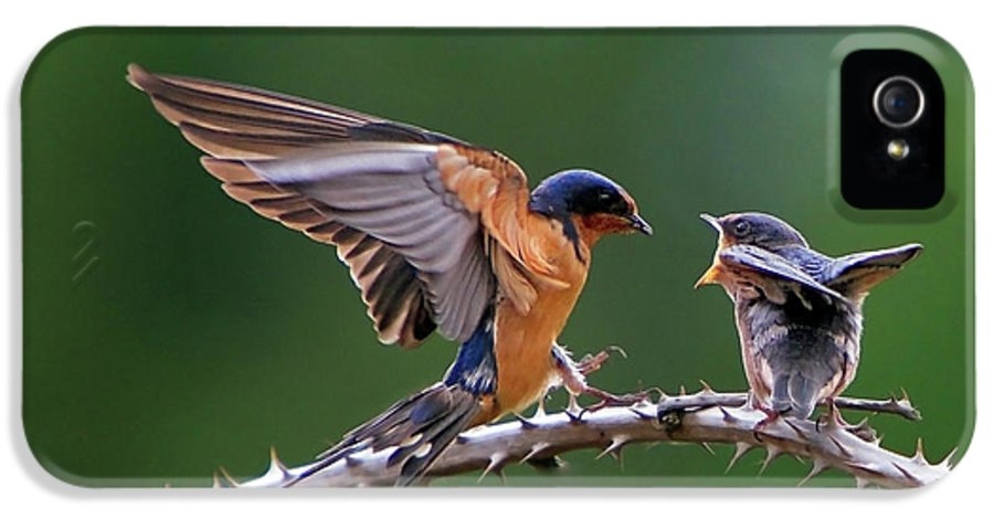 Birds IPhone 5 / 5s Case featuring the photograph Feed Me by William Lee