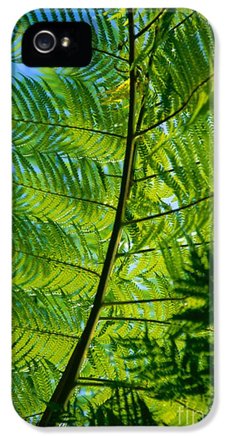 Afternoon IPhone 5 / 5s Case featuring the photograph Fern Detail by Himani - Printscapes