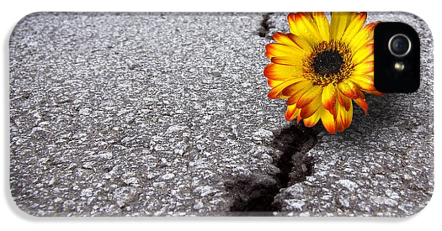 Abstract IPhone 5 / 5s Case featuring the photograph Flower In Asphalt by Carlos Caetano