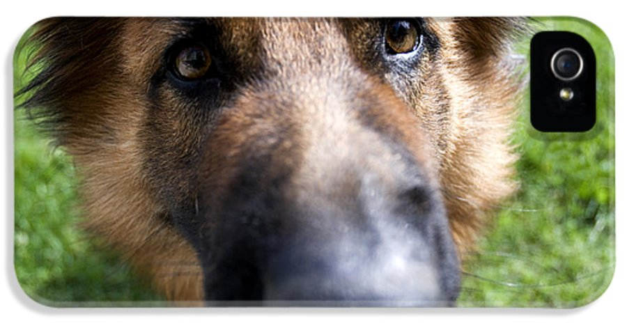 German Shepherd IPhone 5 / 5s Case featuring the photograph German Shepherd Dog by Fabrizio Troiani