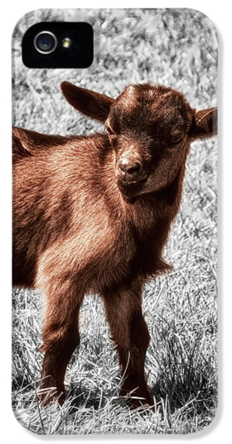 Goat IPhone 5 / 5s Case featuring the photograph Gizmo by Wim Lanclus
