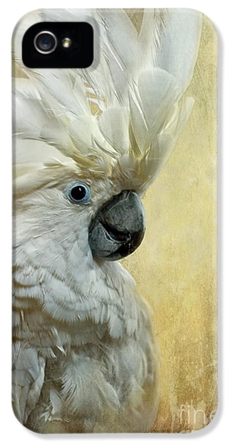 Cockatoo IPhone 5 / 5s Case featuring the photograph Glamour Girl by Lois Bryan