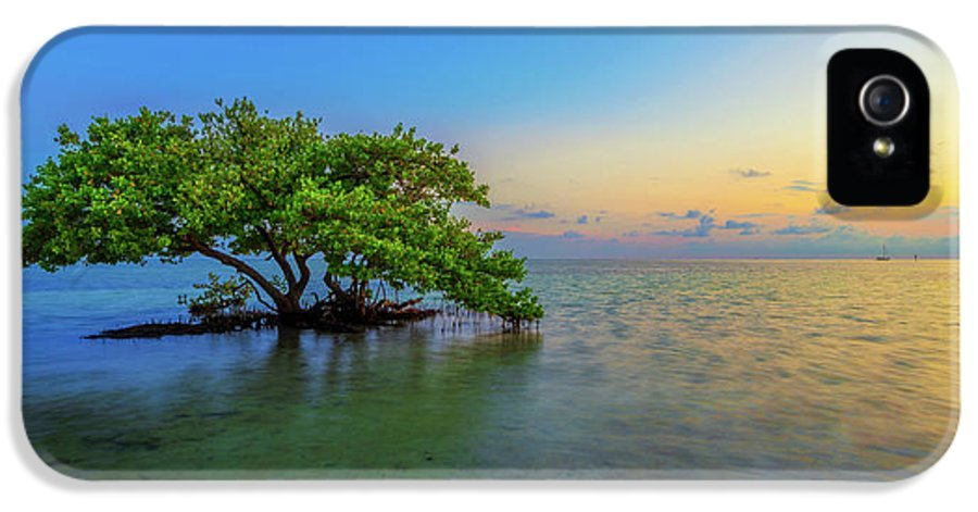 Mangrove IPhone 5 / 5s Case featuring the photograph Isolation by Chad Dutson