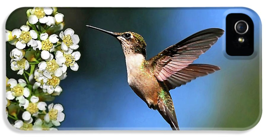 Hummingbird IPhone 5 / 5s Case featuring the photograph Just Looking by Christina Rollo