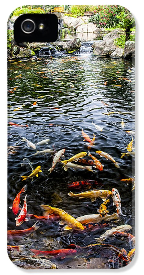 Lake IPhone 5 / 5s Case featuring the photograph Kauai Koi Pond by Darcy Michaelchuk