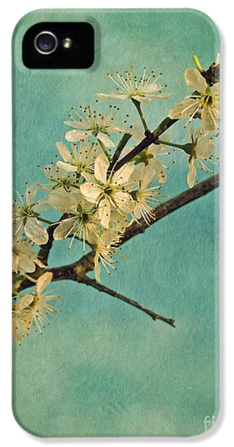May IPhone 5 / 5s Case featuring the photograph Mayblossom by Priska Wettstein