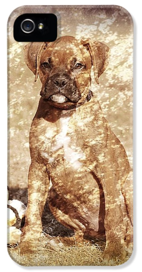 Old Time Boxer Portrait IPhone 5 / 5s Case by Angie Tirado-McKenzie