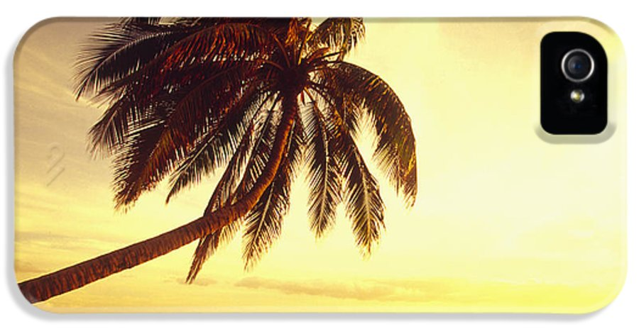 66-csm0125 IPhone 5 / 5s Case featuring the photograph Palm Over The Beach by Ron Dahlquist - Printscapes