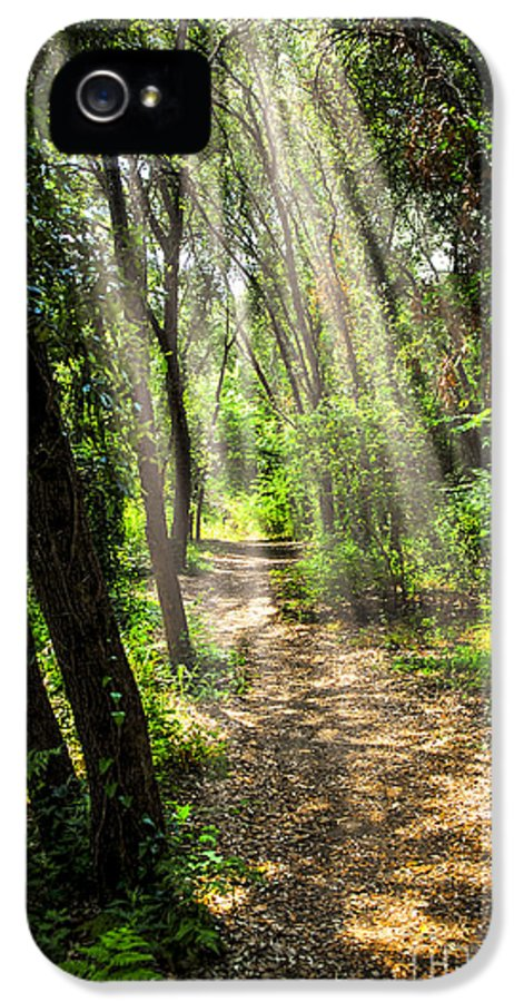 Forest IPhone 5 / 5s Case featuring the photograph Path In Sunlit Forest by Elena Elisseeva