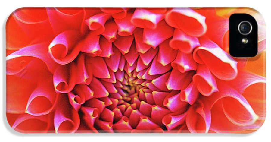 Floral IPhone 5 / 5s Case featuring the photograph Peachy Dahlia by Kathy Yates