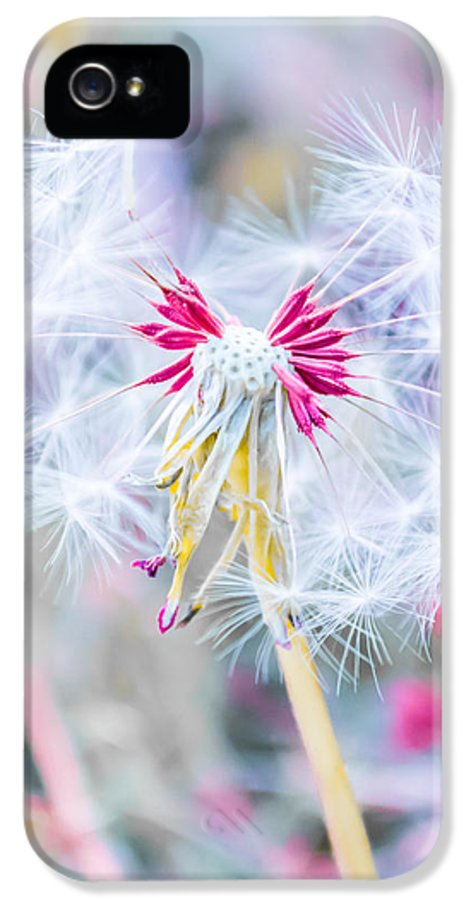 Pink IPhone 5 / 5s Case featuring the photograph Pink Dandelion by Parker Cunningham
