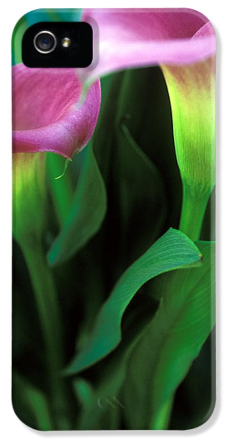 Florals IPhone 5 / 5s Case featuring the photograph Purple Calla Duet by Kathy Yates