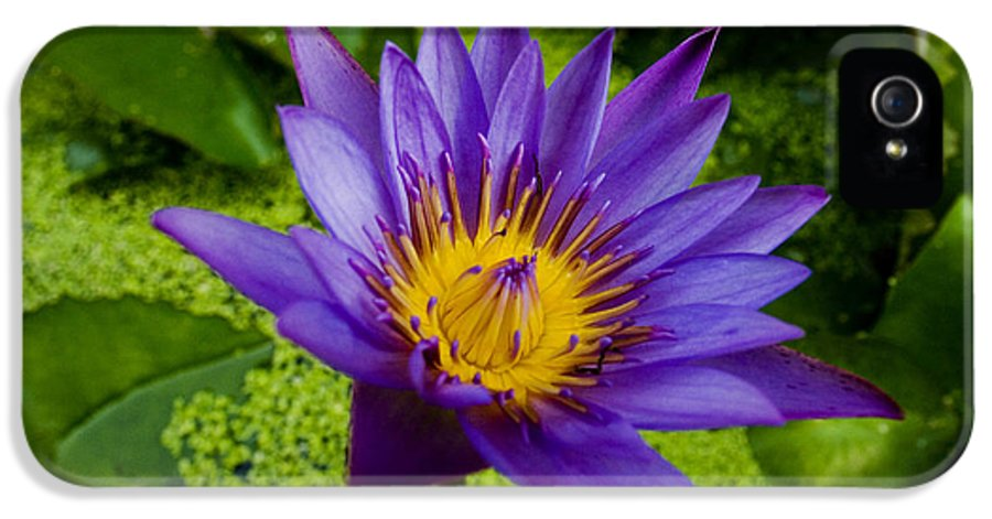 Abstract IPhone 5 / 5s Case featuring the photograph Purple Water Lily by Ray Laskowitz - Printscapes