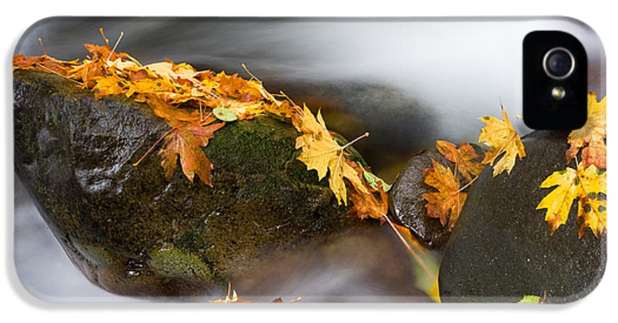 Autumn IPhone 5 / 5s Case featuring the photograph Respite by Mike Dawson