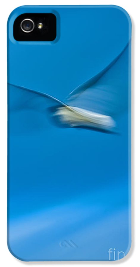 Seagull IPhone 5 / 5s Case featuring the photograph Seagull In Flight by Dustin K Ryan