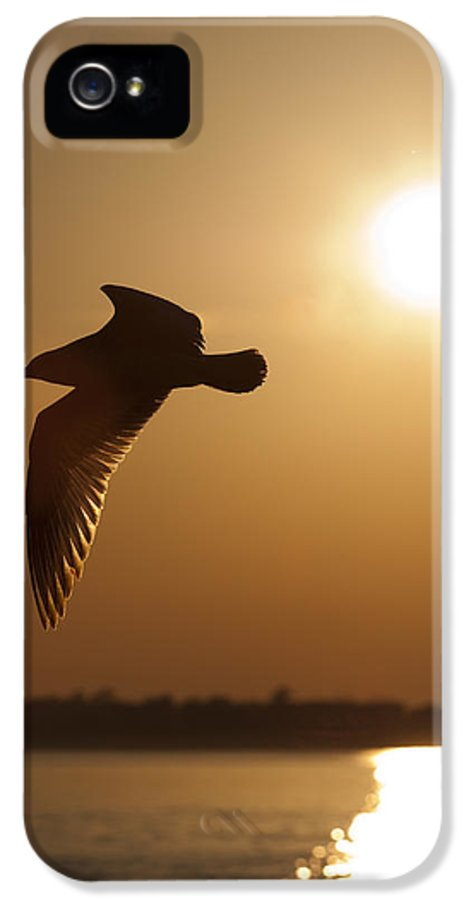 Seagull IPhone 5 / 5s Case featuring the photograph Seagull Sunset by Dustin K Ryan