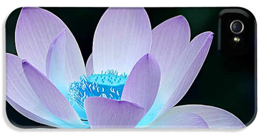 Flower IPhone 5 / 5s Case featuring the photograph Serene by Jacky Gerritsen