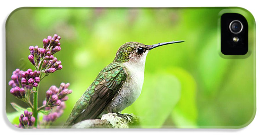 Hummingbird IPhone 5 / 5s Case featuring the photograph Spring Beauty Ruby Throat Hummingbird by Christina Rollo