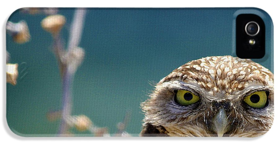 Burrowing Owl IPhone 5 / 5s Case featuring the photograph Standing My Ground Deux by Fraida Gutovich