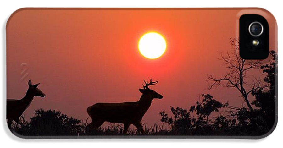 Sunset IPhone 5 / 5s Case featuring the photograph Sunset Silhouette by David Dehner