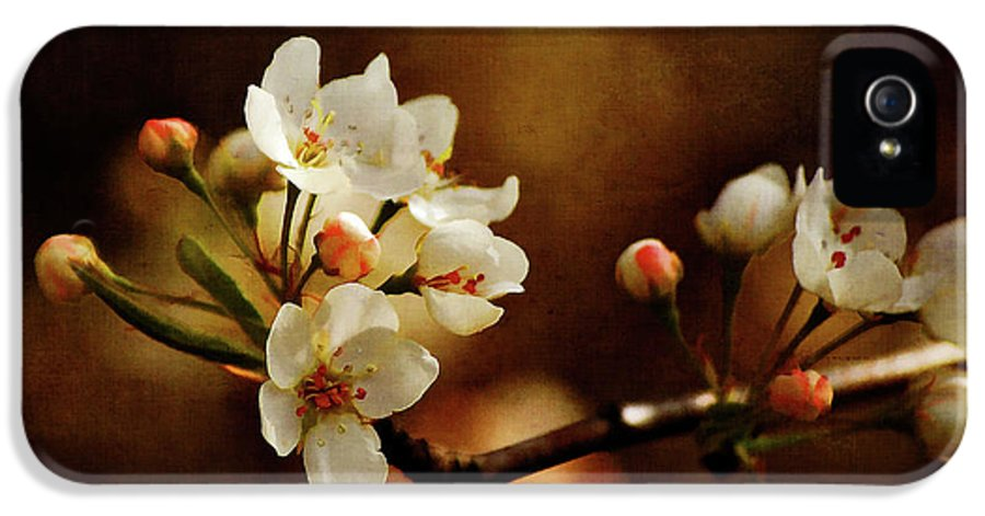Cherry Trees IPhone 5 / 5s Case featuring the photograph The Fleeting Sweetness Of Spring by Lois Bryan