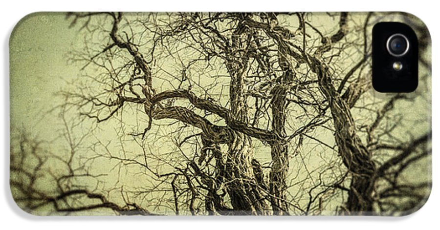 Tree IPhone 5 / 5s Case featuring the photograph The Haunted Tree by Lisa Russo